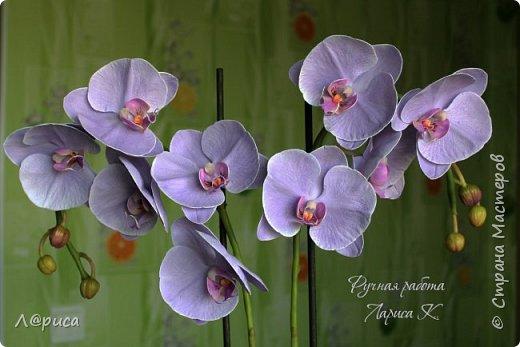 Привет СМ. Я к вам снова с орхидейками, они пока не идеальны, но я продолжаю учиться:) фото 8