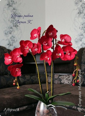 Привет СМ. Я к вам снова с орхидейками, они пока не идеальны, но я продолжаю учиться:) фото 3