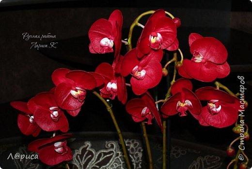 Привет СМ. Я к вам снова с орхидейками, они пока не идеальны, но я продолжаю учиться:) фото 4