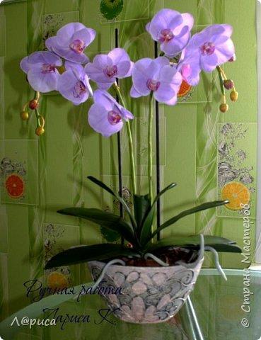 Привет СМ. Я к вам снова с орхидейками, они пока не идеальны, но я продолжаю учиться:) фото 6