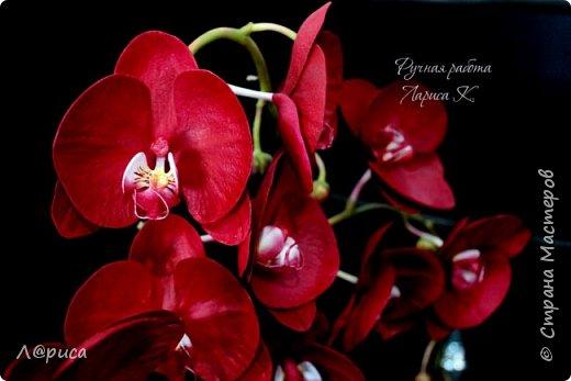 Привет СМ. Я к вам снова с орхидейками, они пока не идеальны, но я продолжаю учиться:) фото 5