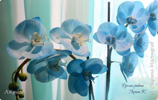 Привет СМ. Я к вам снова с орхидейками, они пока не идеальны, но я продолжаю учиться:) фото 2