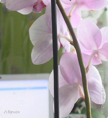 Привет СМ. Я к вам снова с орхидейками, они пока не идеальны, но я продолжаю учиться:) фото 12