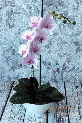 Привет СМ. Я к вам снова с орхидейками, они пока не идеальны, но я продолжаю учиться:) фото 10