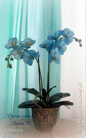 Привет СМ. Я к вам снова с орхидейками, они пока не идеальны, но я продолжаю учиться:) фото 1