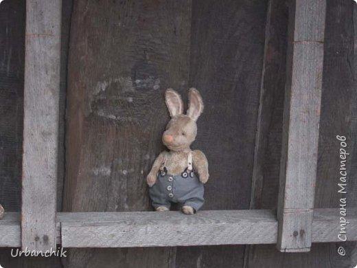 Зайцы бывают разные фото 4