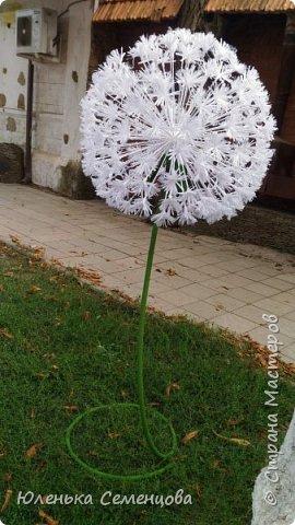 пион ростовой 1,50 см фото 2