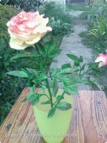 Здравствуйте,долго не решалась сделать цветы на стебле,принимайте моих первенцев.За качество фото извиняюсь. фото 3
