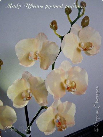 Здравствуйте, жители страны!!! Орхидейная феерия №2, так я её назвала, т к не успеваю показать каждую в отдельности. Эта запись посвящена моим работам над орхидеями за последнее время. фото 5