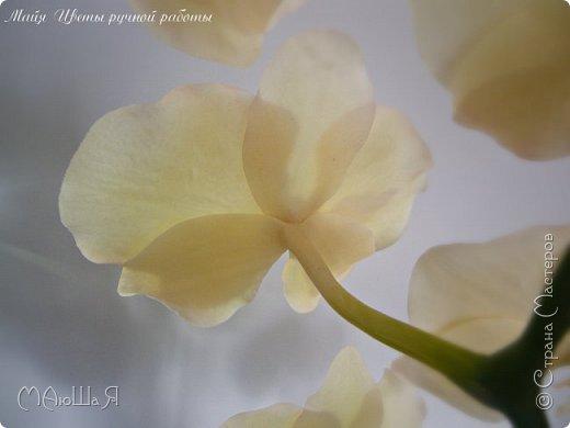 Здравствуйте, жители страны!!! Орхидейная феерия №2, так я её назвала, т к не успеваю показать каждую в отдельности. Эта запись посвящена моим работам над орхидеями за последнее время. фото 6