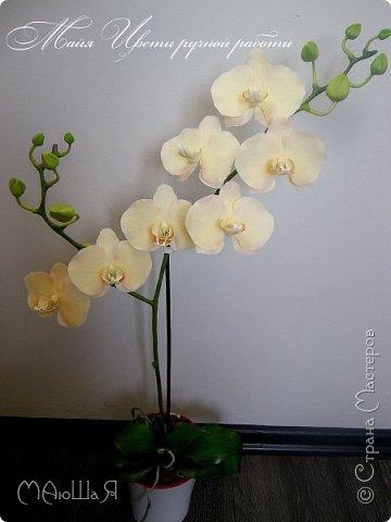 Здравствуйте, жители страны!!! Орхидейная феерия №2, так я её назвала, т к не успеваю показать каждую в отдельности. Эта запись посвящена моим работам над орхидеями за последнее время. фото 4