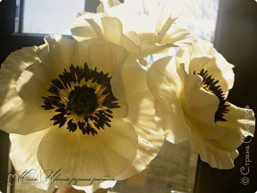 Здравствуйте, жители страны!!! Мои маки из холодного фарфора, вылеплены ещё весной, всё времени нет опубликовать.....))) фото 15