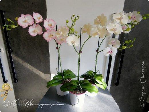 Здравствуйте, жители страны!!! Орхидейная феерия №2, так я её назвала, т к не успеваю показать каждую в отдельности. Эта запись посвящена моим работам над орхидеями за последнее время. фото 12