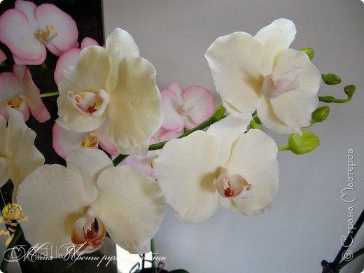Здравствуйте, жители страны!!! Орхидейная феерия №2, так я её назвала, т к не успеваю показать каждую в отдельности. Эта запись посвящена моим работам над орхидеями за последнее время. фото 13