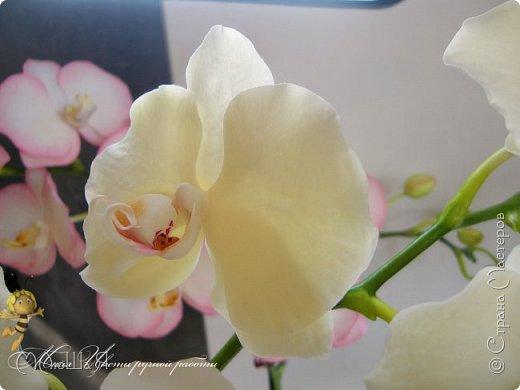 Здравствуйте, жители страны!!! Орхидейная феерия №2, так я её назвала, т к не успеваю показать каждую в отдельности. Эта запись посвящена моим работам над орхидеями за последнее время. фото 14