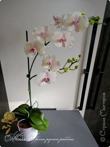 Здравствуйте, жители страны!!! Орхидейная феерия №2, так я её назвала, т к не успеваю показать каждую в отдельности. Эта запись посвящена моим работам над орхидеями за последнее время. фото 15