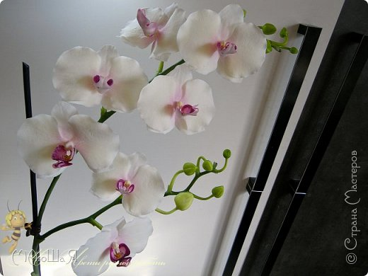 Здравствуйте, жители страны!!! Орхидейная феерия №2, так я её назвала, т к не успеваю показать каждую в отдельности. Эта запись посвящена моим работам над орхидеями за последнее время. фото 16