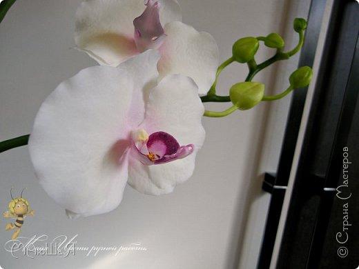 Здравствуйте, жители страны!!! Орхидейная феерия №2, так я её назвала, т к не успеваю показать каждую в отдельности. Эта запись посвящена моим работам над орхидеями за последнее время. фото 17