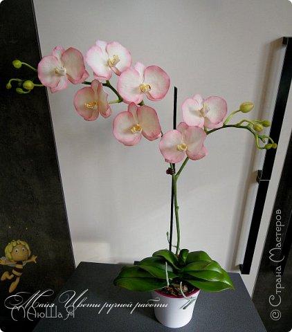 Здравствуйте, жители страны!!! Орхидейная феерия №2, так я её назвала, т к не успеваю показать каждую в отдельности. Эта запись посвящена моим работам над орхидеями за последнее время. фото 18