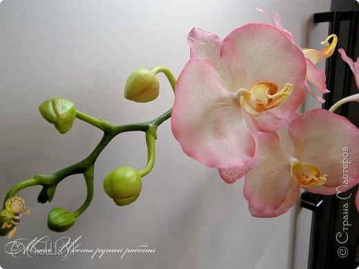 Здравствуйте, жители страны!!! Орхидейная феерия №2, так я её назвала, т к не успеваю показать каждую в отдельности. Эта запись посвящена моим работам над орхидеями за последнее время. фото 20