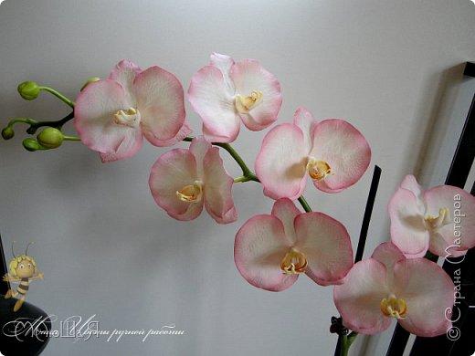 Здравствуйте, жители страны!!! Орхидейная феерия №2, так я её назвала, т к не успеваю показать каждую в отдельности. Эта запись посвящена моим работам над орхидеями за последнее время. фото 19