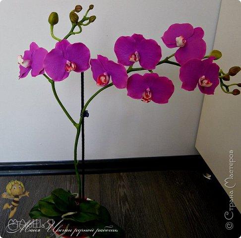Здравствуйте, жители страны!!! Орхидейная феерия №2, так я её назвала, т к не успеваю показать каждую в отдельности. Эта запись посвящена моим работам над орхидеями за последнее время. фото 22