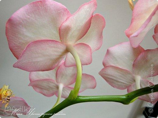 Здравствуйте, жители страны!!! Орхидейная феерия №2, так я её назвала, т к не успеваю показать каждую в отдельности. Эта запись посвящена моим работам над орхидеями за последнее время. фото 21