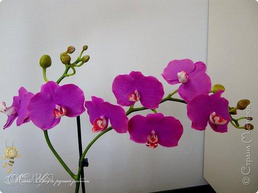 Здравствуйте, жители страны!!! Орхидейная феерия №2, так я её назвала, т к не успеваю показать каждую в отдельности. Эта запись посвящена моим работам над орхидеями за последнее время. фото 23