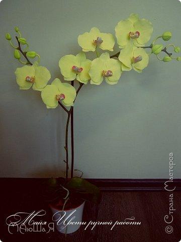 Здравствуйте, жители страны!!! Орхидейная феерия №2, так я её назвала, т к не успеваю показать каждую в отдельности. Эта запись посвящена моим работам над орхидеями за последнее время. фото 7