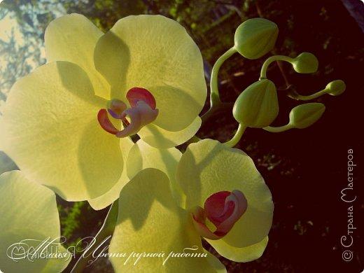 Здравствуйте, жители страны!!! Орхидейная феерия №2, так я её назвала, т к не успеваю показать каждую в отдельности. Эта запись посвящена моим работам над орхидеями за последнее время. фото 9