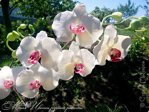 Здравствуйте, жители страны!!! Орхидейная феерия №2, так я её назвала, т к не успеваю показать каждую в отдельности. Эта запись посвящена моим работам над орхидеями за последнее время. фото 1