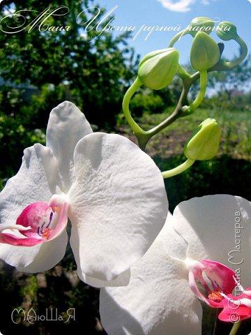 Здравствуйте, жители страны!!! Орхидейная феерия №2, так я её назвала, т к не успеваю показать каждую в отдельности. Эта запись посвящена моим работам над орхидеями за последнее время. фото 3