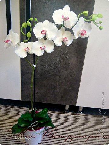 Здравствуйте, жители страны!!! Орхидейная феерия №2, так я её назвала, т к не успеваю показать каждую в отдельности. Эта запись посвящена моим работам над орхидеями за последнее время. фото 2