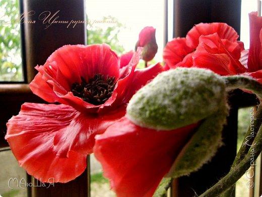 Здравствуйте, жители страны!!! Мои маки из холодного фарфора, вылеплены ещё весной, всё времени нет опубликовать.....))) фото 8