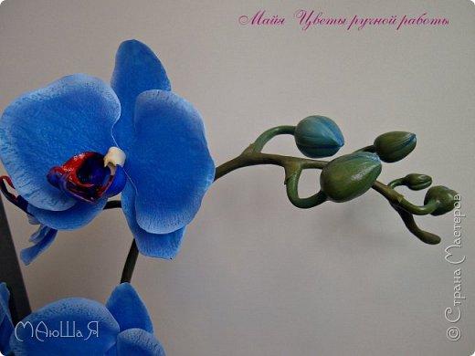 Здравствуйте, жители страны!!! Орхидейная феерия №2, так я её назвала, т к не успеваю показать каждую в отдельности. Эта запись посвящена моим работам над орхидеями за последнее время. фото 11