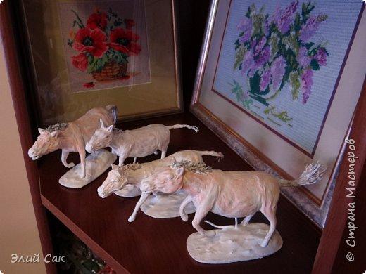 ло́шадь Пржева́льского фото 4