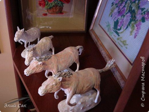 ло́шадь Пржева́льского фото 3