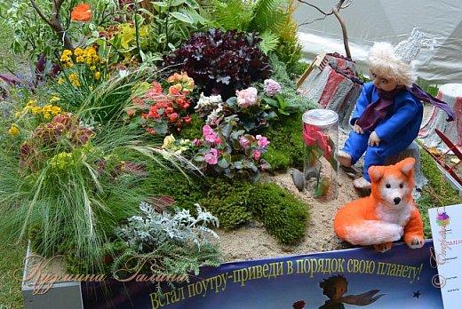 """По сложившейся традиции всех,кто хотел попасть на ежегодную выставку """"Город-сад"""",но не смог в силу ряда обстоятельств,я приглашаю на виртуальную экскурсию. фото 10"""