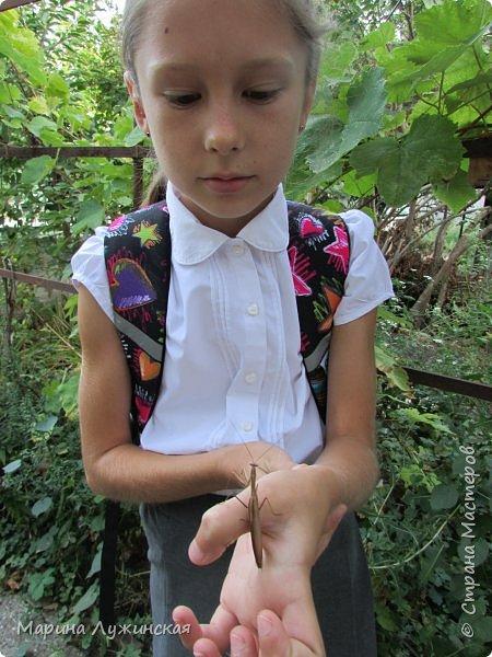 Мир насекомых полностью накрыл нас своим разнообразием и  красотой ! Всё-таки как интересно понаблюдать за какой-нибудь букашкой, внимательно рассмотреть её, а потом пойти и почитать, кто это был. Стараемся фотографировать все свои находки, но не всегда удаётся...  Я очень радуюсь, что мои дети , особенно дочечка, научились дружить с  любым насекомчиком!  Сегодня хочу продолжить наши истории этой дружбы...  фото 4