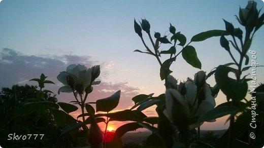 Закаты мая завораживают фото 14