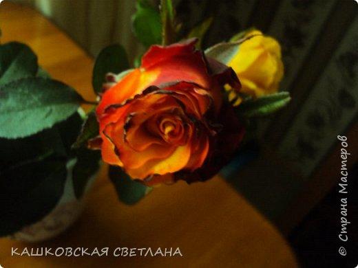 Девочки, приглашаю вас на прогулку по моим цветулькам. Фото будет много. Сегодня день роз. Сразу извиняюсь, что без названий. Какие-то покупались у бабулек на рынке, много роз из чубуков и отростков. Живу в обычной пятиэтажке. Это плетистые белая и красная, красная цветет первый раз. В этом году еще посадила чубуками желтую и розовую крупные плетистые, главная проблема лето пережить-пережили , а зиму все хорошо переживают.  фото 14