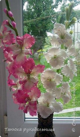 Здравствуйте мастера и гости Страны! В моем цветочном саду выросли гладиолусы, правда всего три (боялась за них браться). Представляю их на ваш суд. фото 4