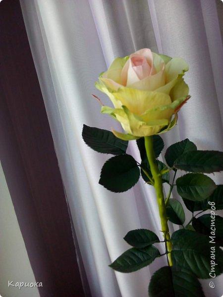 Роза  из фоамирана на стебле из холодного фарфора. фото 1