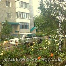Покажу вам мой раек и соседский заодно. Клумбы вдоль дома идут. Нашла у себя старенькие фотки, сейчас много новых цветов появилось.  фото 9