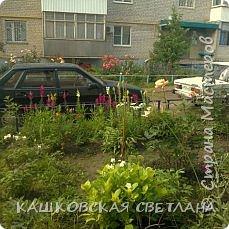 Покажу вам мой раек и соседский заодно. Клумбы вдоль дома идут. Нашла у себя старенькие фотки, сейчас много новых цветов появилось.  фото 10