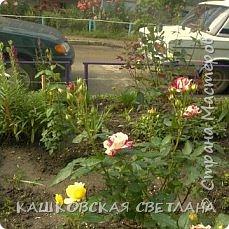 Покажу вам мой раек и соседский заодно. Клумбы вдоль дома идут. Нашла у себя старенькие фотки, сейчас много новых цветов появилось.  фото 1
