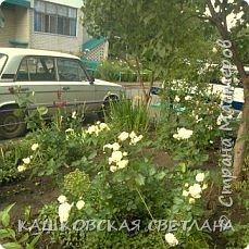 Покажу вам мой раек и соседский заодно. Клумбы вдоль дома идут. Нашла у себя старенькие фотки, сейчас много новых цветов появилось.  фото 11
