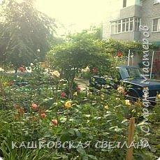 Покажу вам мой раек и соседский заодно. Клумбы вдоль дома идут. Нашла у себя старенькие фотки, сейчас много новых цветов появилось.  фото 12