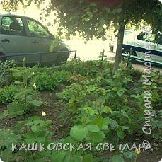 Покажу вам мой раек и соседский заодно. Клумбы вдоль дома идут. Нашла у себя старенькие фотки, сейчас много новых цветов появилось.  фото 14