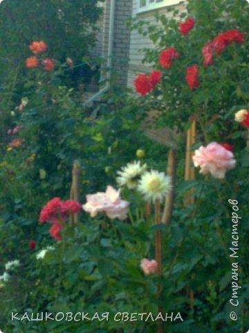 Покажу вам мой раек и соседский заодно. Клумбы вдоль дома идут. Нашла у себя старенькие фотки, сейчас много новых цветов появилось.  фото 16